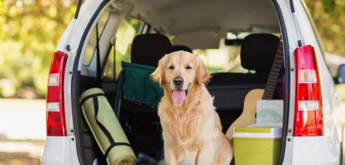 Viaggiare con gli animali