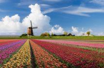 Mulini d'Olanda