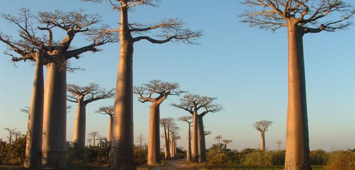 Madagascar, l'isola rossa
