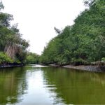 Mangrovie di Tumbes