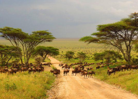 Parco Nazionale del Serengeti – Tanzania